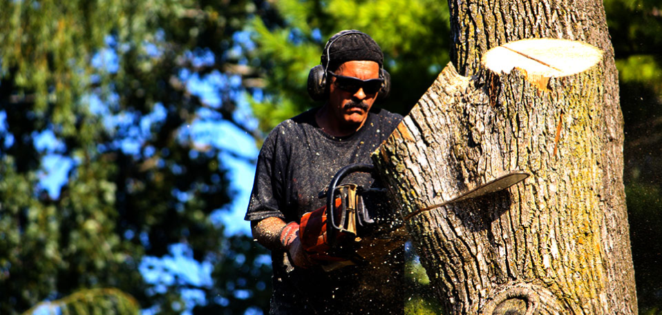 tree removal tree trimming service landscaping service san
